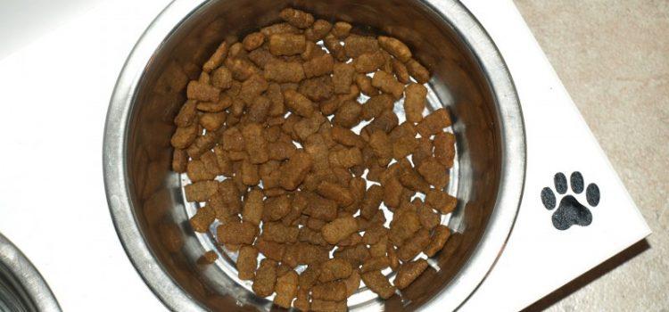 Det skal du tænke over, når du køber mad til din hund