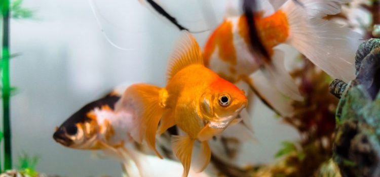 Få godt gang i dit akvarie