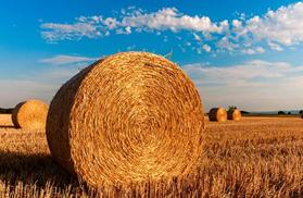 Biobrændsel – den miljøvenlige alternativ til opvarmningen af din bolig