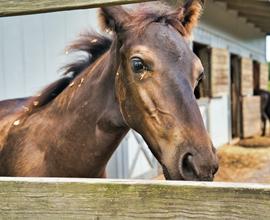 3 ting, der gør det nemmere at være hest i din stald