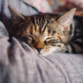Find tryghed med katteseler fra Agroland
