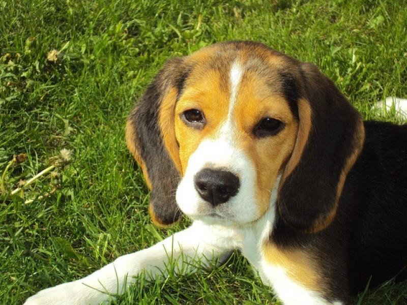 Forkæl din hund med lækkert og billigt BARF-foder